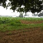 Neighboring farmland next to Candlelight Inn north