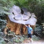 nice tree trunk!