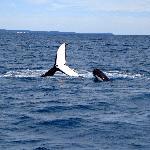 Whale x 2