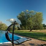 l'ulivo e la piscina