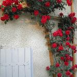 Roses over the shutters at front of the house