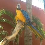 parrots outside the restaurant