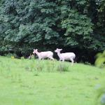Queen Elizabeth I's white deer