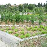 The hotels herbal and vegetables garden on the terrace