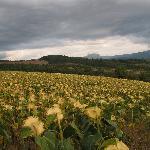 Une vue près de Roquetaillade