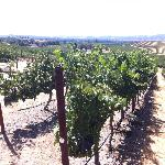 Fun to walk around vineyards on tour and learn about the owls and other critters