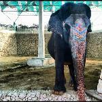 Lonley elephant!