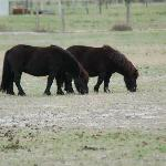 Ponies to feed!