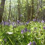 RSPB Reserve Blean Woods Photo