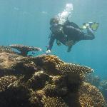 Remote Area Dive
