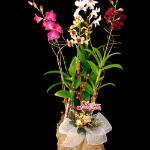 Kawamoto Orchid Nursery Photo