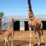 Hedrick's Exotic Animal Farm