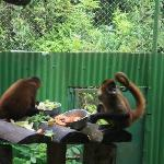Two of the monkeys at the sanctuary