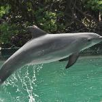 Dolphin Discovery over at Tortola