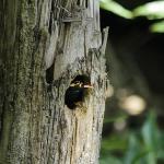 Bird(mina) nest near the tree house