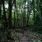 a walk through the Secret Forest behind Foxy's