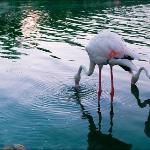 Flamingos at Trader Vic's