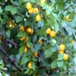 Garden profusion