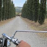 Zufahrt zum Landhaus-typisch toskanische Zypressenallee