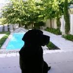 Clive's faithful dog
