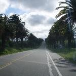 Camino de Colonia a Granja Arenas