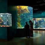 The Salish Sea Gallery
