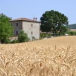 Photo of Agriturismo Le Spighe