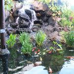 Koi fountains