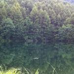 水面に映り込む山の緑が綺麗です