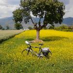 Pedalare nella Valle Umbra - Cycling in the Valle Umbra