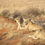 Safari in Kenya con Raymond Kingi