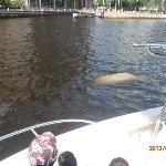 Manatee sighting off the finnegan's dock