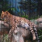 Erie Zoo.