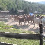 Taking the horses out to pasture