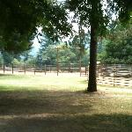 The Horse Corrals
