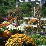 Plants for Sale at Kildeer Farm Stand