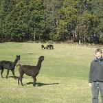 More Alpaca Friends