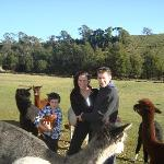 Us, alpacas, the owner's son, and some chickens