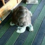 Tortoise Security Guard