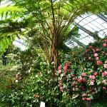 the greenhouse with camellias - spring 2010