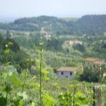 View from vineyard