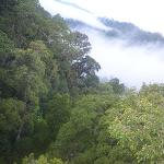 View from Canopy Walk