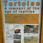 info on tortoise