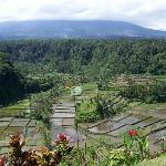 beautiful rice terrace front of restaurant near besakih temple in Bali