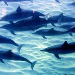 un bagno con i delfini
