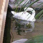 One of the two swans.