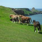 Ponies at worm's Head