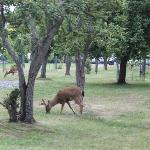 Deers on the hotel grounds