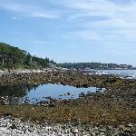 Rachel Carson's salt pond