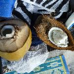 coconut sampling
